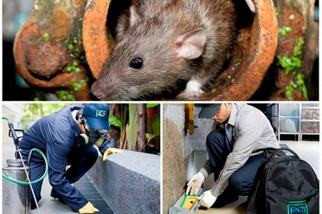 Как выгнать мышей из дома народными средствами