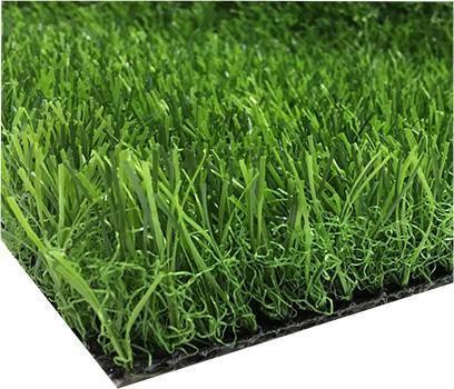 Какие семена травы лучше для газона