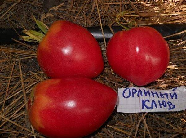 Полудетерминантные сорта томатов для теплиц