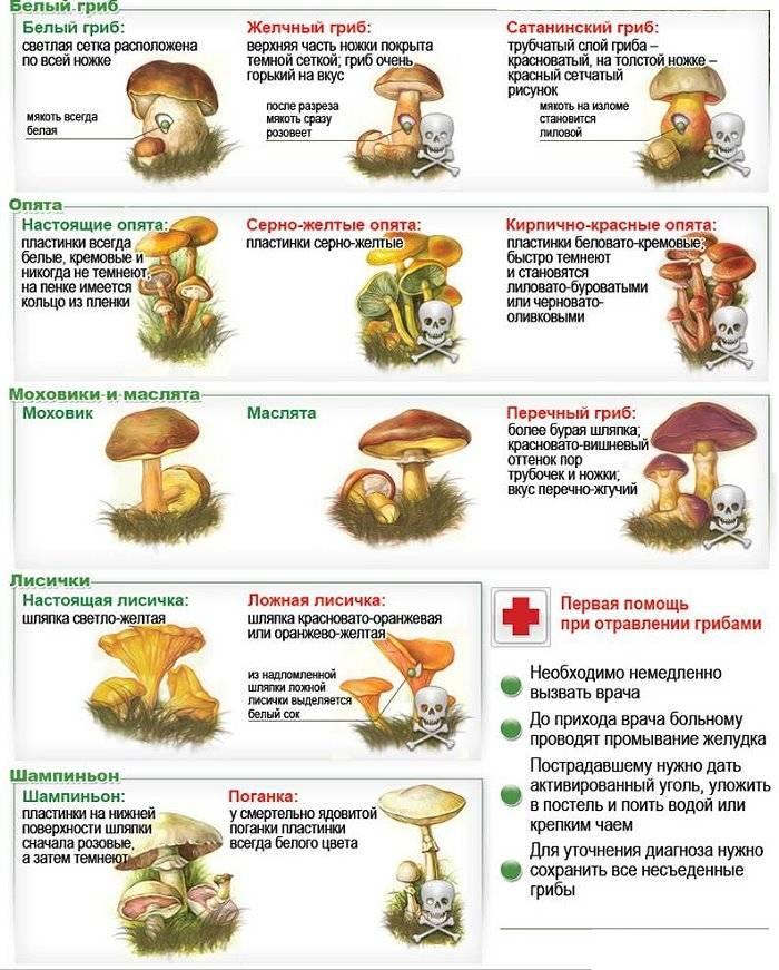 Распознавание съедобных и ядовитых грибов