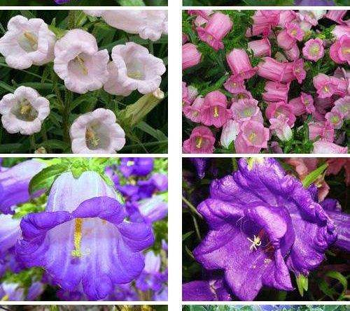 Однолетние растения фото и названия