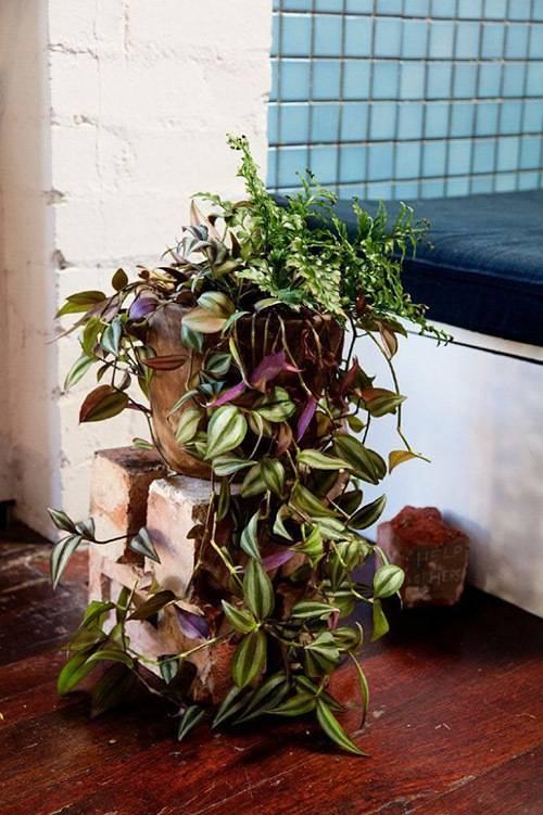 Домашние цветы в горшках названия и фото