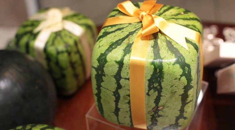 Как правильно выращивать арбузы
