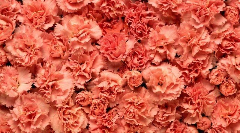 Цветы которые долго стоят