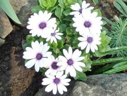 Какие бывают осенние цветы