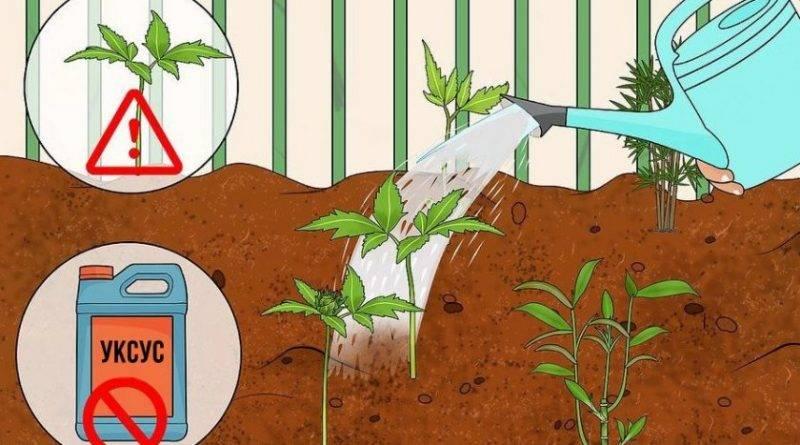 Чем поливать гортензию чтобы она поменяла цвет