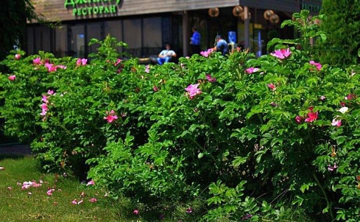 Питомник растений южный старые кузьминки у серпухова