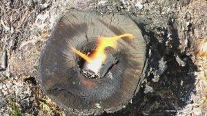 Как убрать пень от дерева