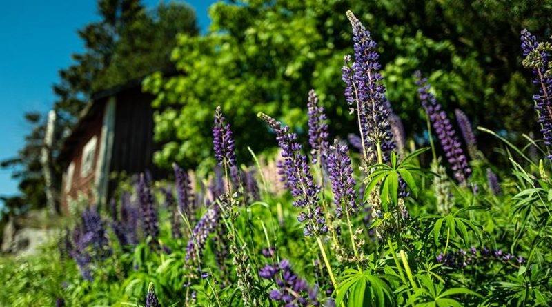 Синие цветы фото и названия
