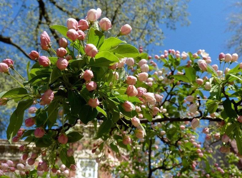 Чем опрыскивать яблони весной от вредителей