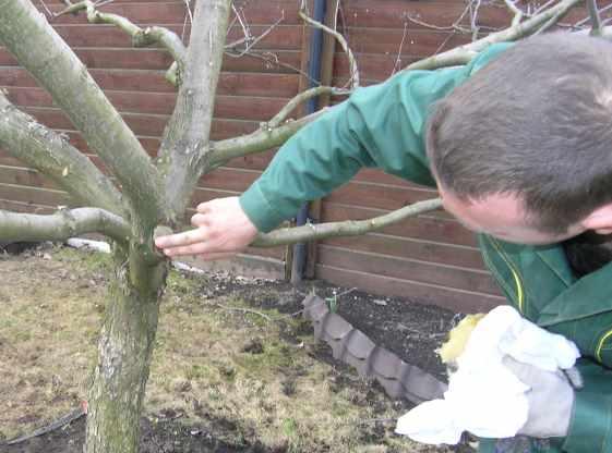 Как подрезать яблони весной видео