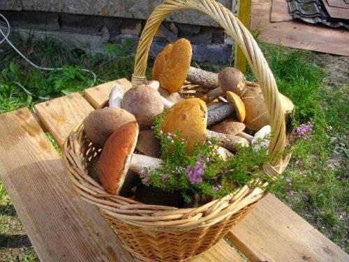 Как сажать мицелий грибов
