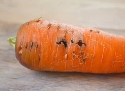 Как бороться с морковной мухой на огороде