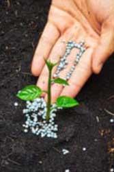 Что нужно для роста растений