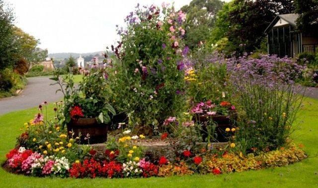 Неприхотливые многолетники цветущие все лето