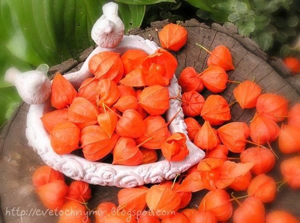 Оранжевые фонарики в зимнем букете
