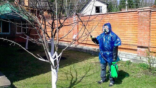 Как обрабатывать деревья медным купоросом