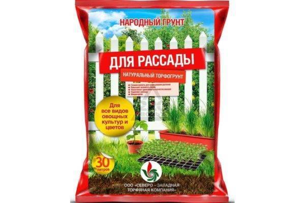 Технология выращивания картофеля из семян