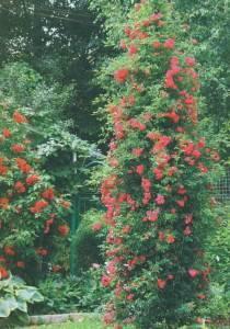 Роузбук конкурс лучший сад фото