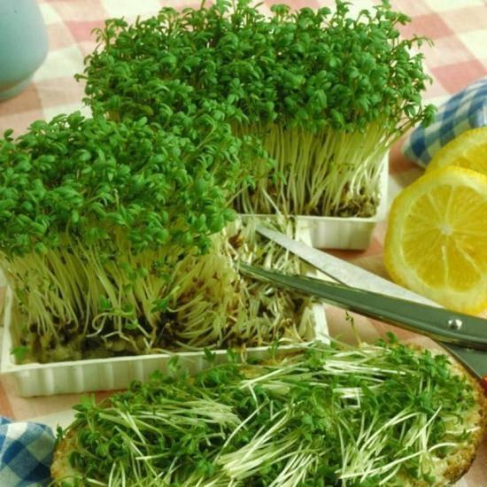 Как вырастить салат на подоконнике в квартире