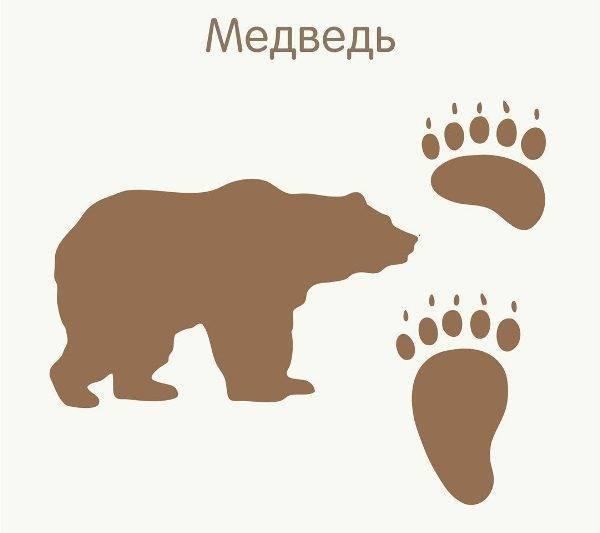 Следы лесных животных
