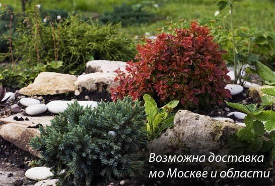 Островцы Питомник Растений Магазин Раменский Район