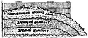 Выращивание овощей на высоких грядках