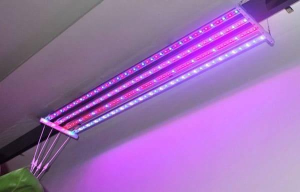 Лампы для досвечивания рассады в домашних условиях