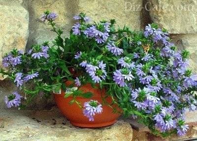 Цветы для вазонов цветущие все лето