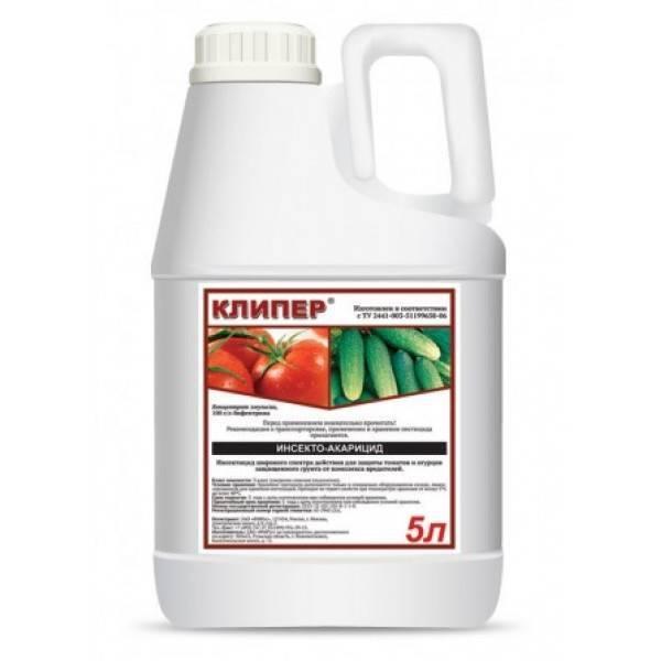 Как избавиться от белокрылки на помидорах