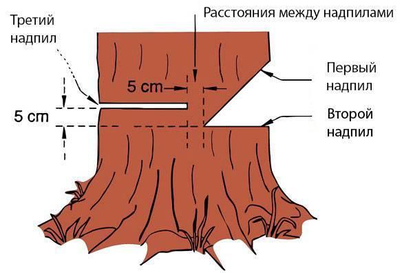 Как правильно валить лес