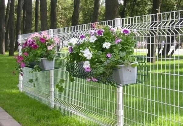 Живой забор на даче что посадить