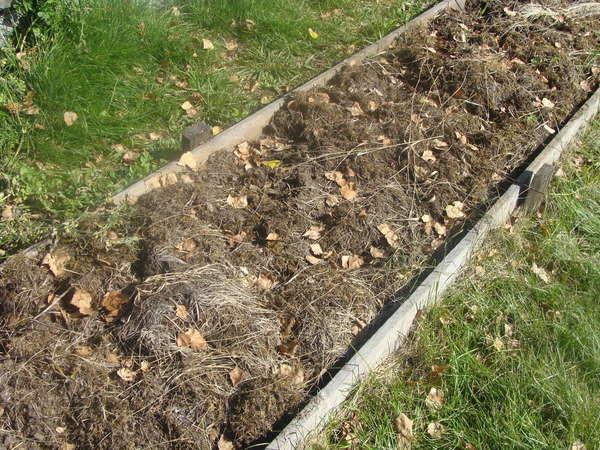 Удобрения для сада и огорода осенью
