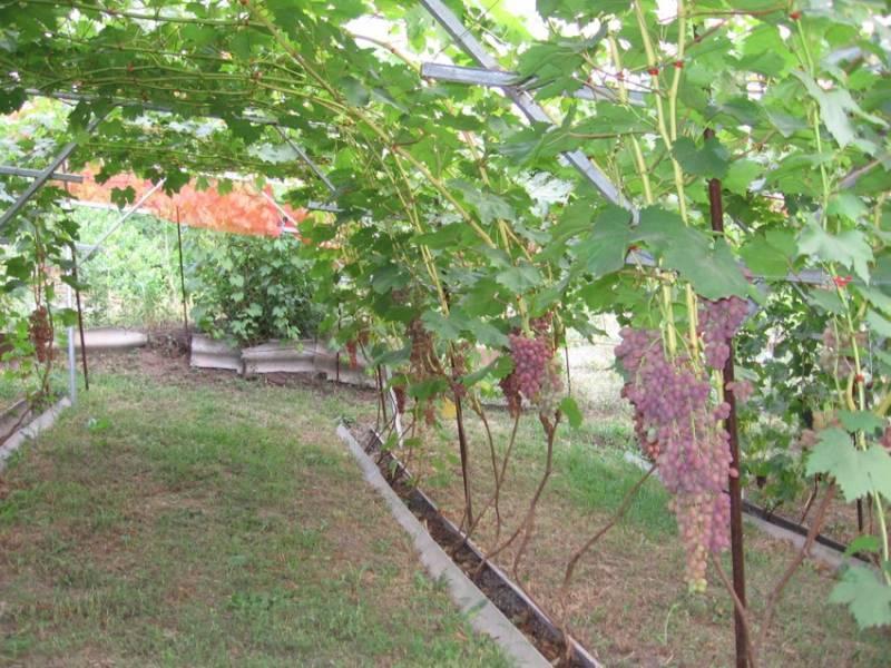 Опоры под виноград