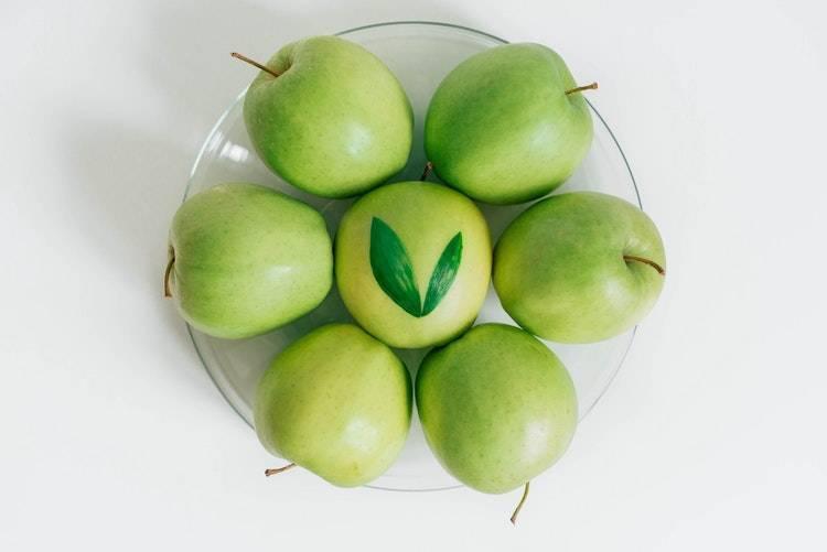 Как выбрать саженцы яблони