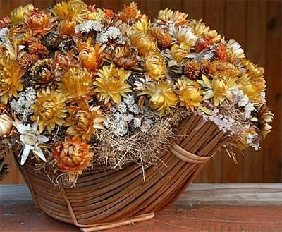 Букеты из сухоцветов фото