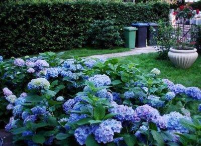 Что посадить на кислой почве