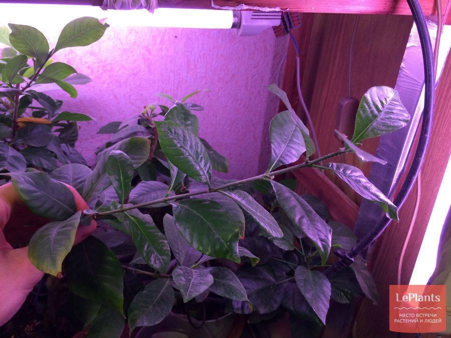 Какими лампами подсвечивать растения