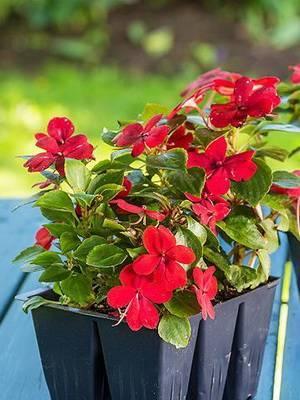 Новые цветы для сада фото