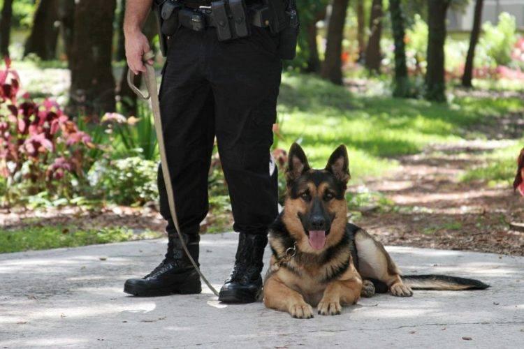 Небольшая собака для охраны дома