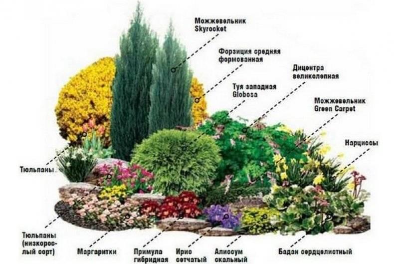 Композиции из хвойников и кустарников фото