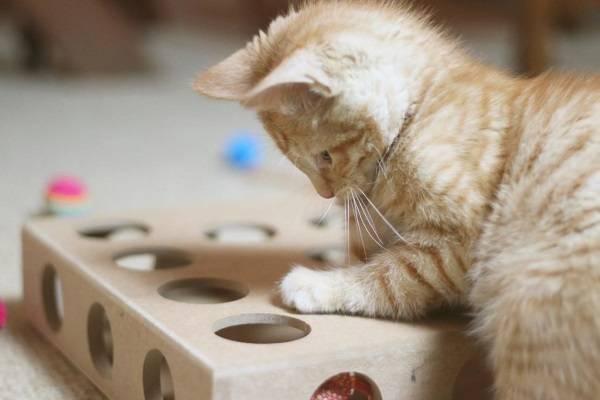 Что нужно для кота