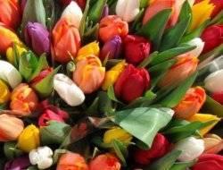 Корни растущие на луковице тюльпана называются