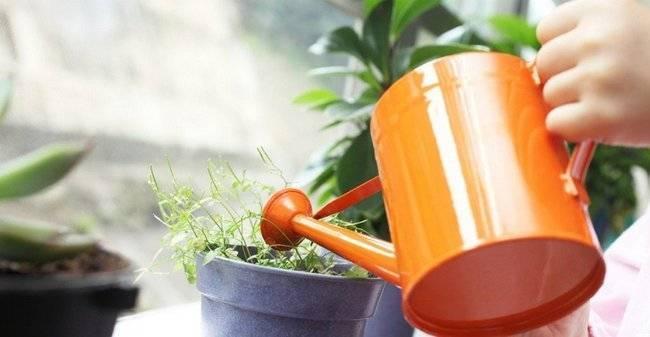 Бор для растений