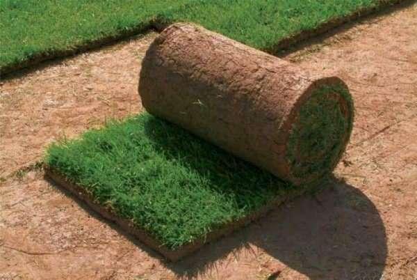 Посев газонной травы осенью в зиму