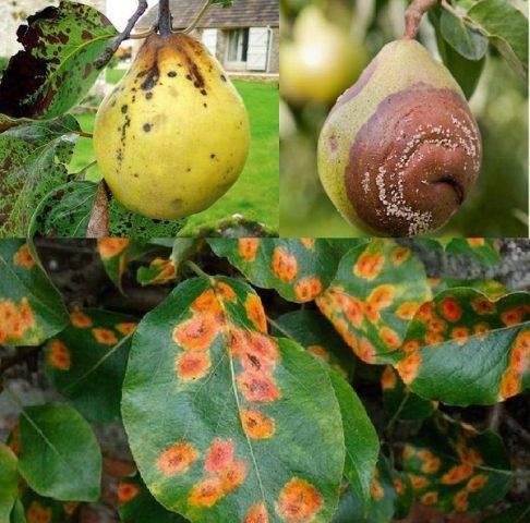 Южное плодовое дерево