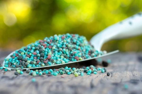 Какие минеральные удобрения ускоряют созревание плодов