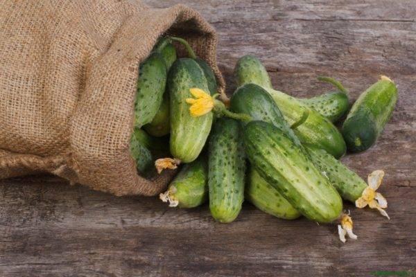 Семена огурцов для засолки и консервации