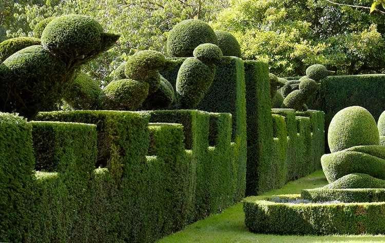 Хвойный уголок в саду какие растения сочетать