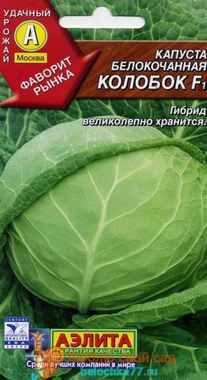 Сорта капусты с фото и описанием